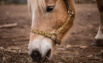 foder til heste
